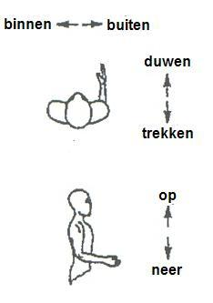 Maximale krachten bij bewegingen met één arm